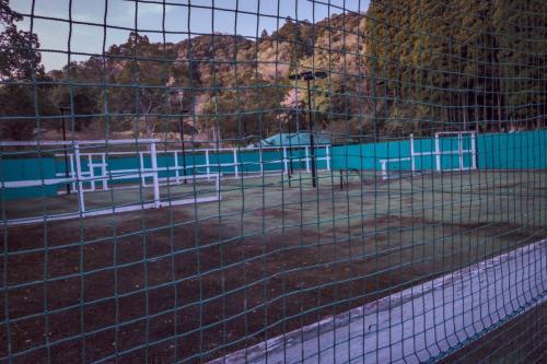 テニスコート撮影スタジオ  (2)
